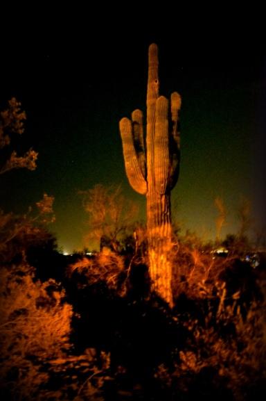 Cactus by Night